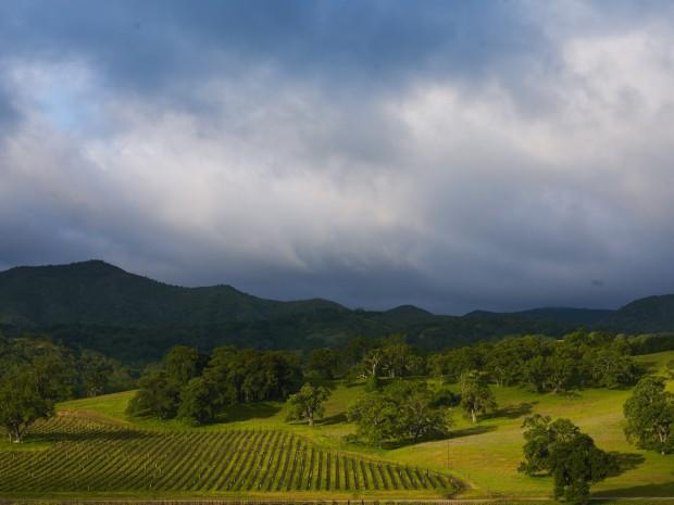 Ancient Peaks Fog into Vineyard