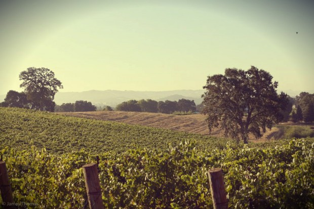 Austin Hope Vineyard
