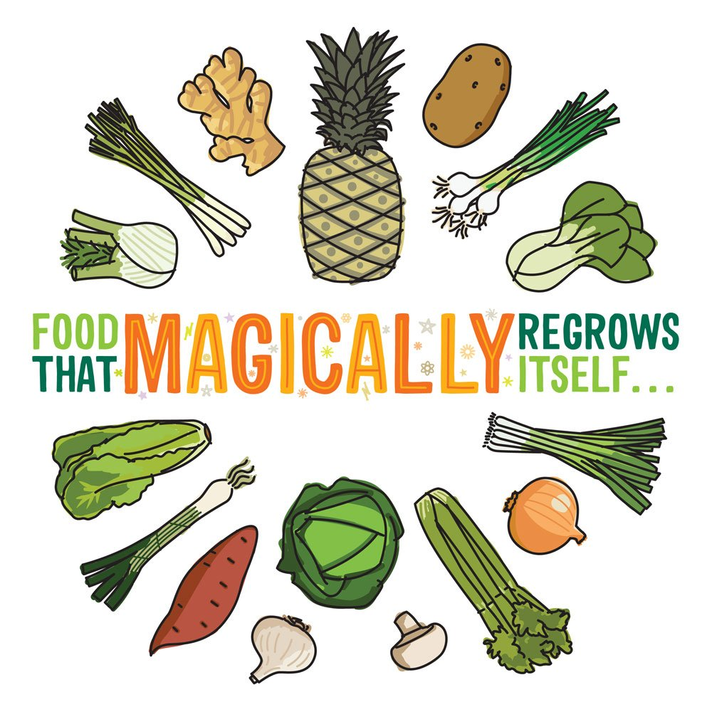 Food That Magically Regrows Itself from Kitchen Scraps - Jerry James ...