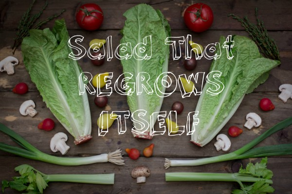 Veggies That Regrow Themselves 2