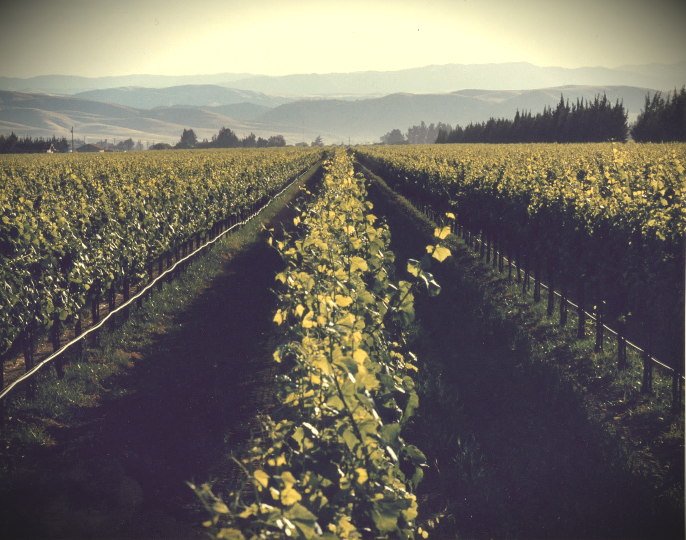 The Difference Between Sustainable, Organic & Biodynamic Wine
