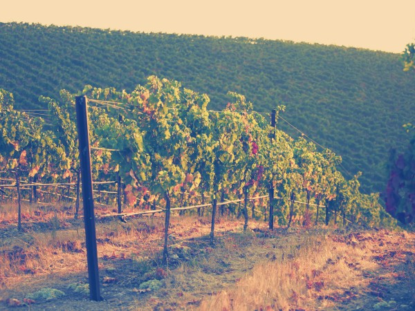Wente Vineyards