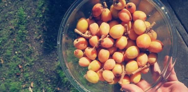 fallingfruit loquats