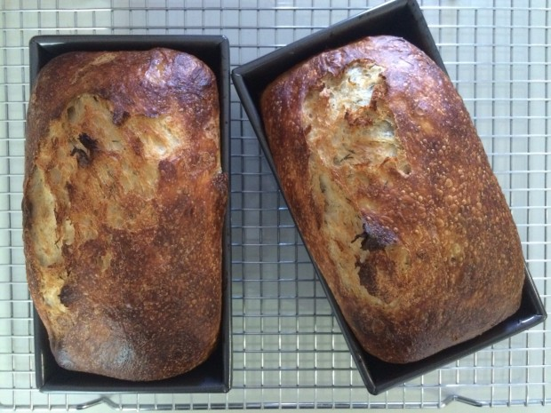 Dilly Buttermilk Sourdough Bread