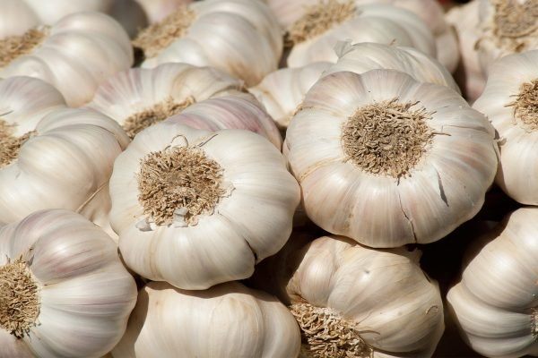 How to Store Fresh Garlic For 6 Months