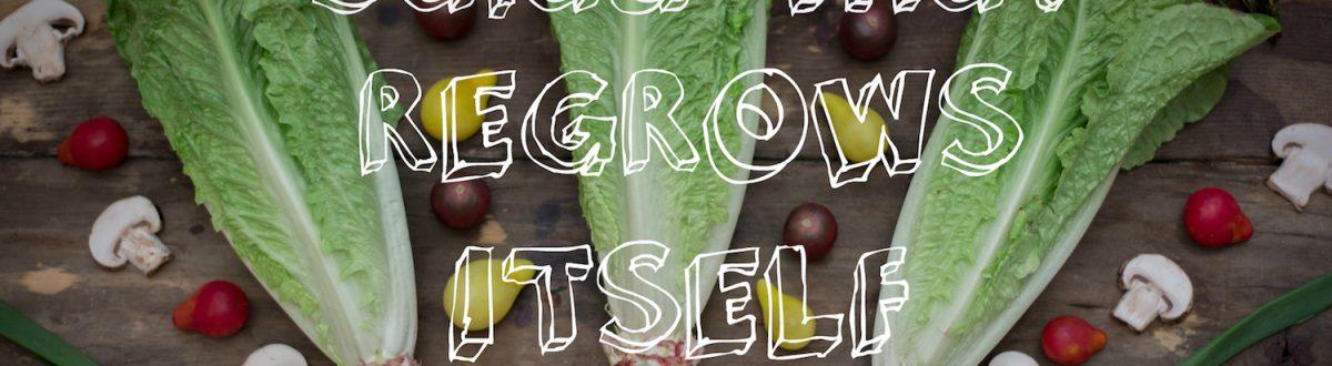 Veggies That Regrow Themselves 2 1